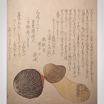 Pine mushroom and red clam shell, Shunga, surimono, Japan, early 19th century [thumbnail]